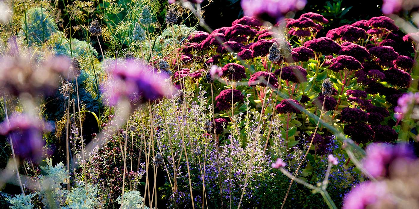 Leek Staffordshire potager garden design