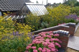 Sedum 'Autumn Joy' Fennel and Agastache 'Blackadder' at one of my designed gardens.