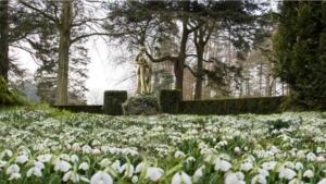 Henbury Hall snowdrops
