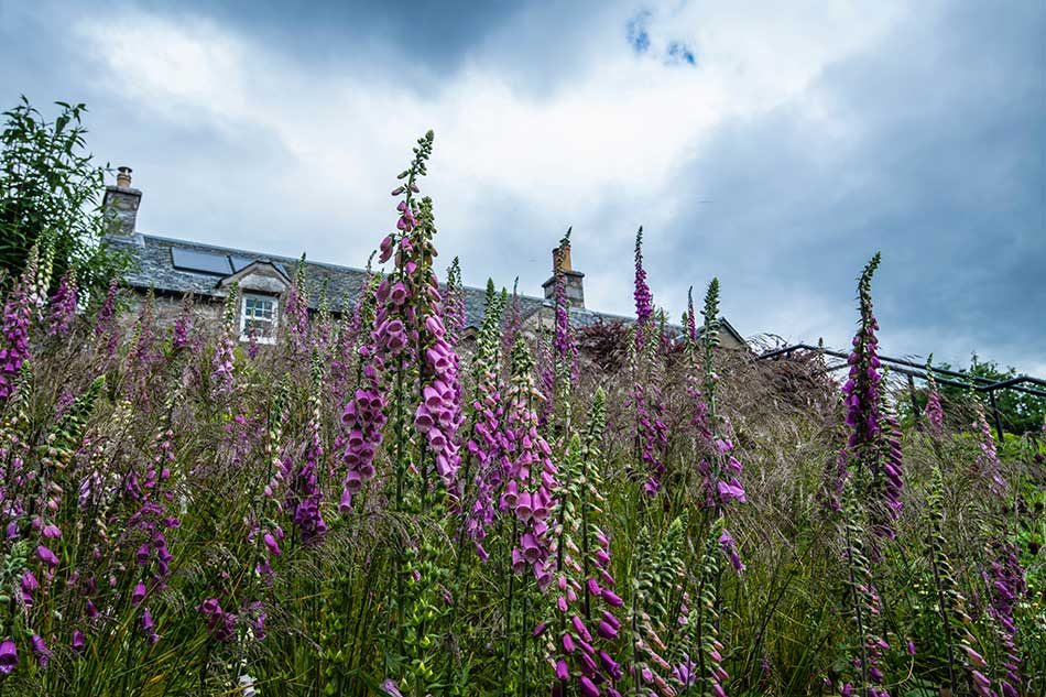 Garden Consultancy for an Estate in Highland Perthshire
