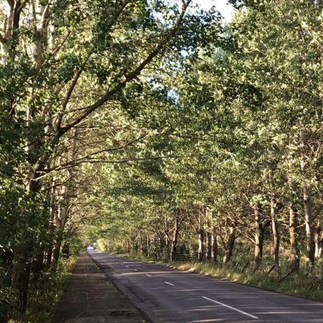 Listen to the poplar Avenue. #aberfeldy #highlandperthshire #populustremula  #aspen #eveningwalk
